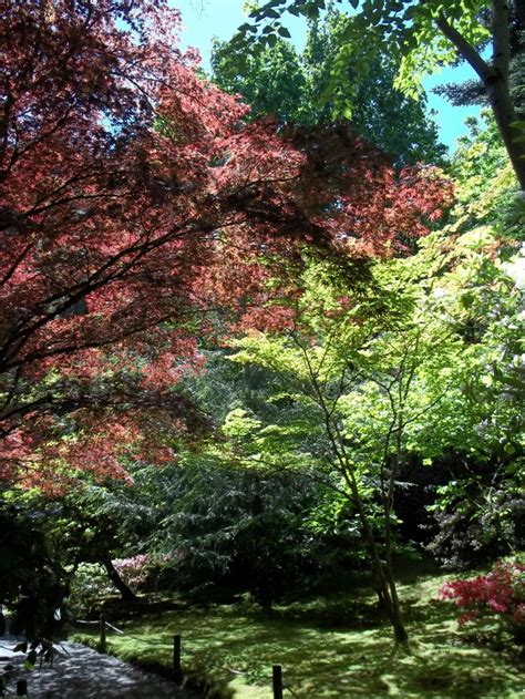 botanical gardens seattle wa 17 best images about america s gardens on