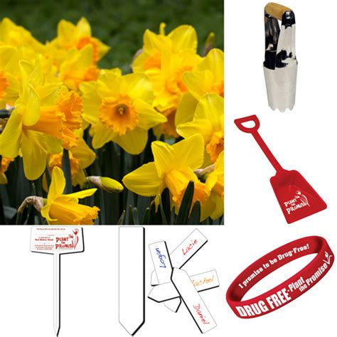 daffodil rubber st classroom package yellow tulip ribbon week plant