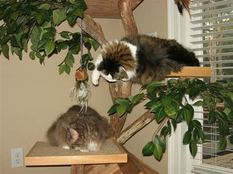 best tree for cats place of residence for cats by pet tree house home reviews
