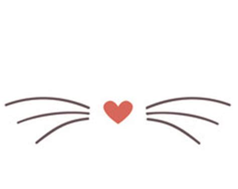 cat nose and whiskers cat whiskers clipart 29