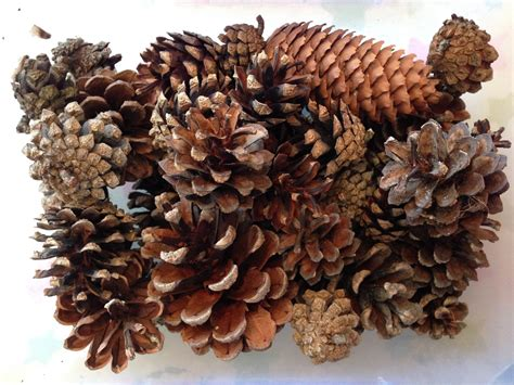 pine cone crafts craft pinaddicts challenge