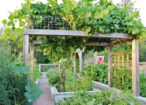 Shabby Chic Kitchen Cabinets chic grape arbor method seattle farmhouse landscape