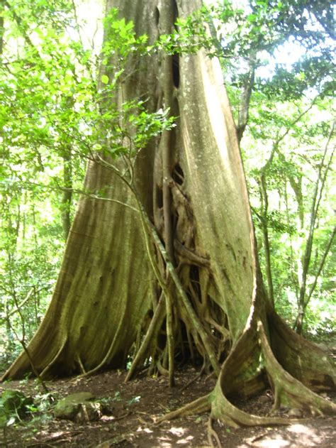 popular types of trees popular types of trees in costa rica trees various and