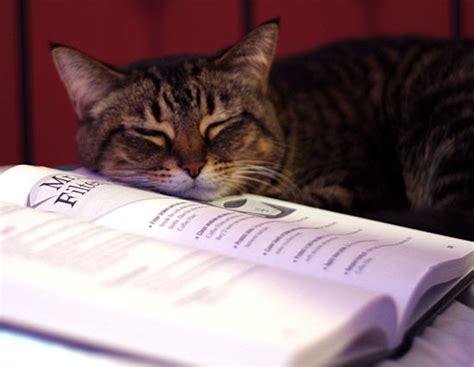 cat picture books ちょっと難しい本ですね 本を読む猫 読書の邪魔をする猫 naver まとめ