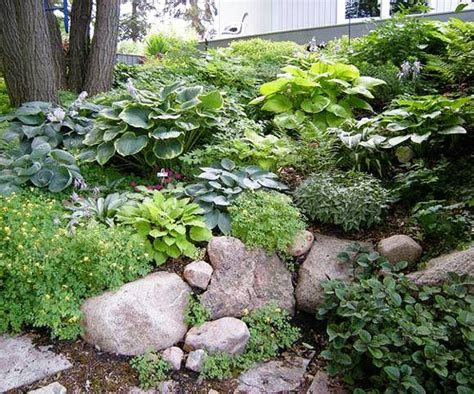 rock garden plants for shade design lessons from a minnesota shade garden beautiful