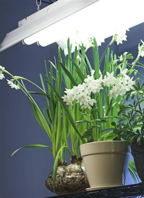 indoor plants no light fluorescent lighting for indoor gardening gardening how