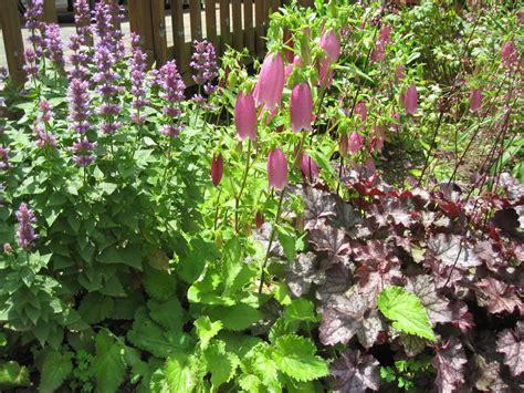 garden flowers perennials garden flowers perennials photograph frugal gardening tip