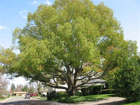 trees best chor tree and your yard best trees to plant