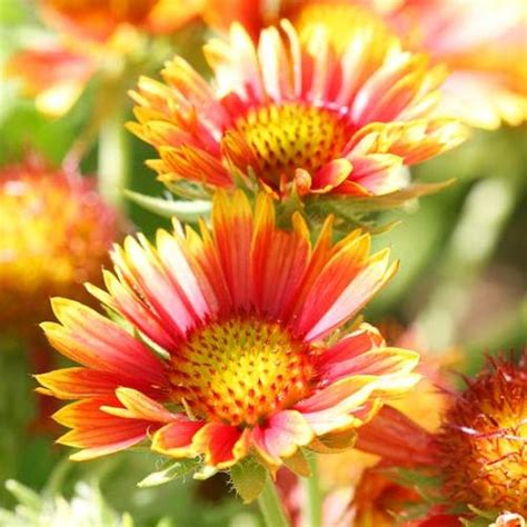 list of garden flowers with pictures 27 beautiful perennial flowers that suits your garden