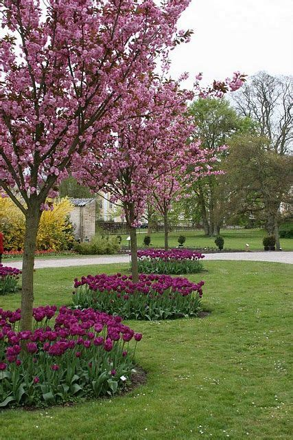 cherry tree zone 9b 335 best images about landscaping zone 9b on