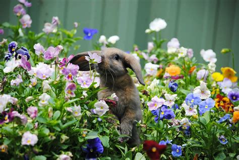 flower and bunny animals sniffing flowers is the cutest thing 15