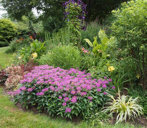 garden flowers perennials flowers on friday perennial garden up bird