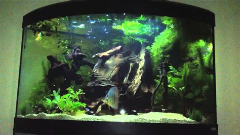 Great House Designs discus set up 190 litre corner fluval aquarium youtube
