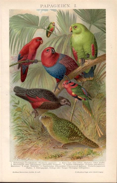 Nature Inspired Home Decor 20 best images about antique bird illustrations on