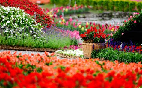 flower garden photo flower garden backgrounds wallpaper cave