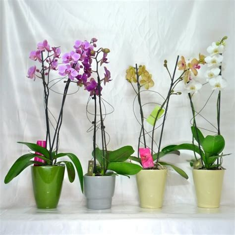 flower pot for an orchid plant or any other of plant