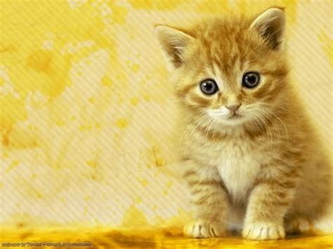 Cat Wallpaper by Wallpapers World Cats Wallpapers