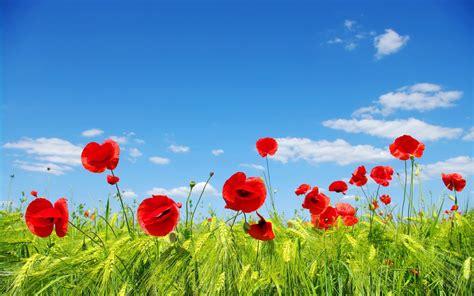 fonds d 233 cran nature les fleurs arrivent en grand format fleurs fonds d 233 cran gratuits by