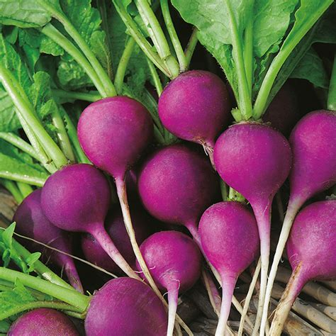vegetable garden plants list vegetable garden plants list