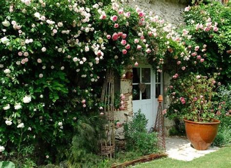comment planter un rosier sur une fa 231 ade ensoleill 233 e gardens garden and green houses