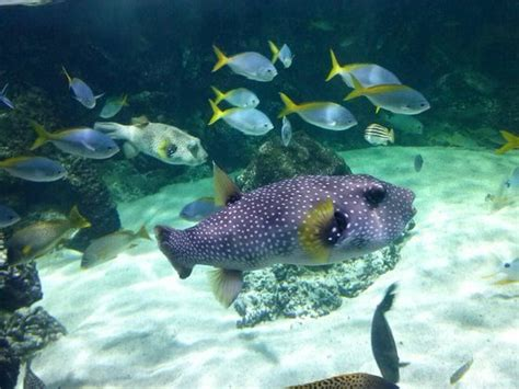 aquarium la rochelle 2017 les meilleurs conseils pour votre visite tripadvisor