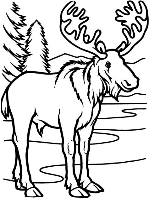 coloring book pictures to print free printable moose coloring pages for