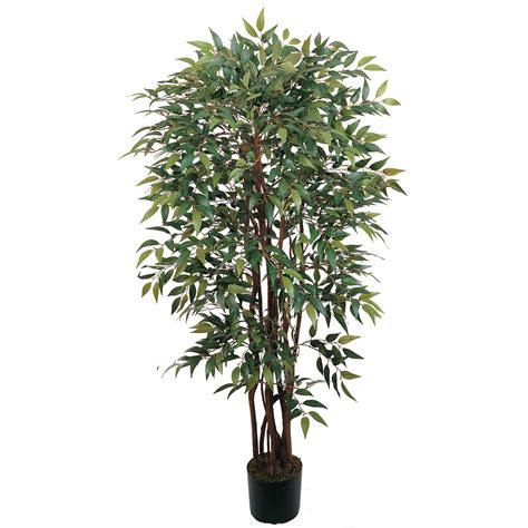 pot tree 4 foot smilax tree potted 5081