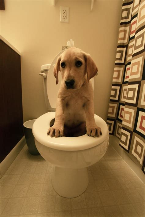 on toilet 18 strong independent dogs that don t need no
