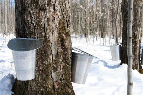 maple syrup nutrition benefits recipes dr axe