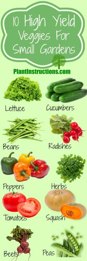 high yield vegetable garden 10 high yield vegetables you should plant today plant