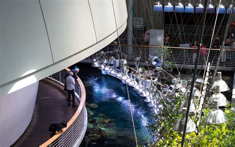 up and coming cities in california heads up cal academy s neighborhood free days are coming