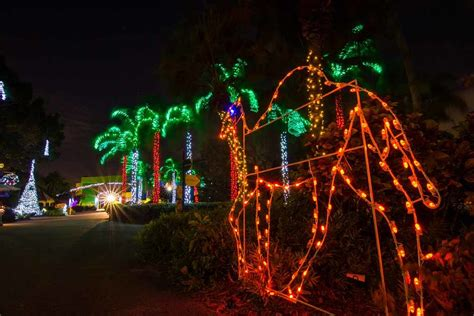 zoo lights miami where to see lights in miami and fort lauderdale