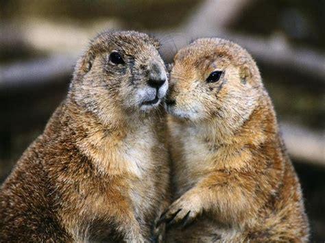groundhog day hd picodur polar s tale a happy groundhog day o