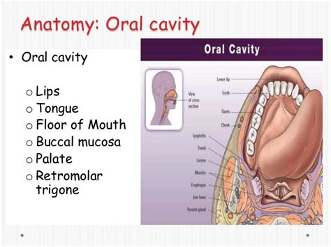 Floor Of Mouth Anatomy by Common Oral Lesions By Ravindra Daggupati