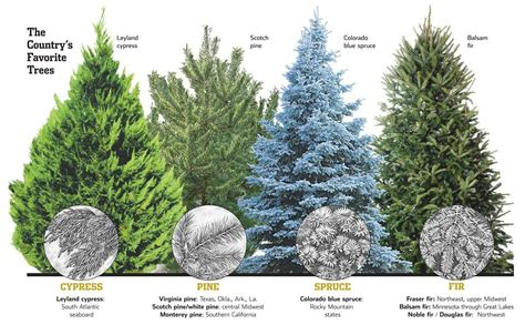 popular types of trees types of trees monstermathclub
