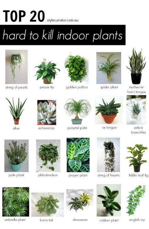 houseplants that don t need sunlight plant low light plants awesome popular house plants 10