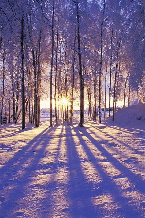 paesaggio neve sole alberi natura sfondi per cellulare