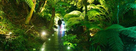 australian national botanic gardens canberra luminous botanicus iii enlighten