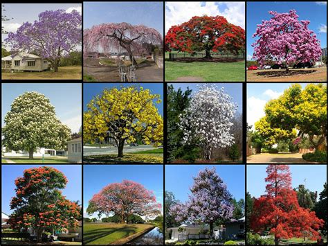 name of the tree most beautiful flowering trees of the world not my