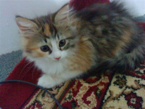 images cats my cat jojo cats photo 20717887 fanpop
