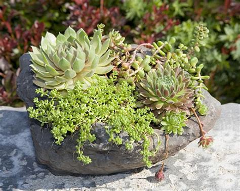 succulent planter ideas creative succulent planter ideas