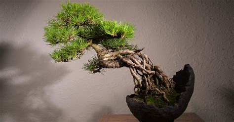tree symbolism japanese of growing a miniature tree symbolism and