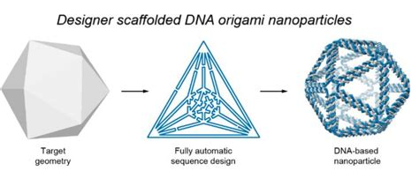 dna origami software top design brings new dna structures to