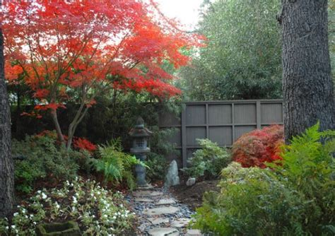 maple tree small yard 28 japanese garden design ideas to style up your backyard