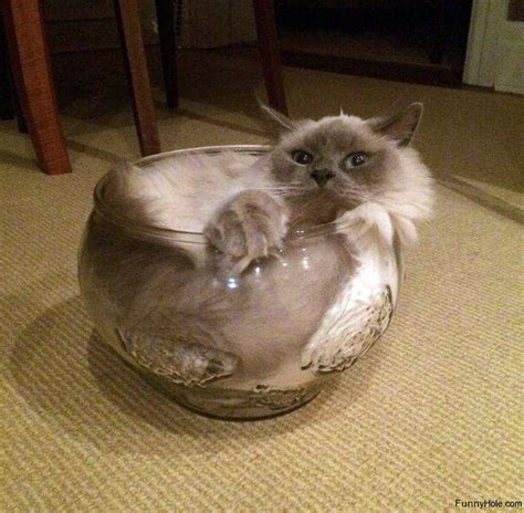 of a cat cats are liquid