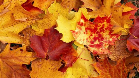 for fall fall wallpaper 1920x1080 36887