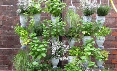 hanging wall garden step by step guide for a hanging bottle wall garden