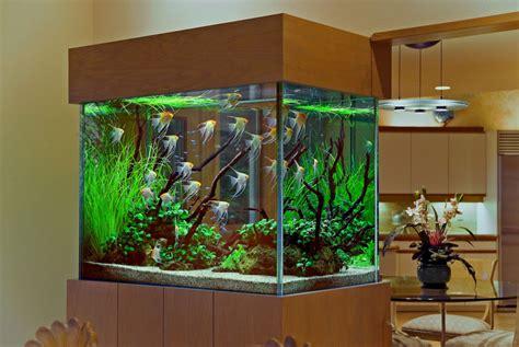aquarium decoration ideas freshwater interior decoration with aquarium aquarium