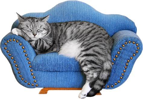 chats beaux gifs du net