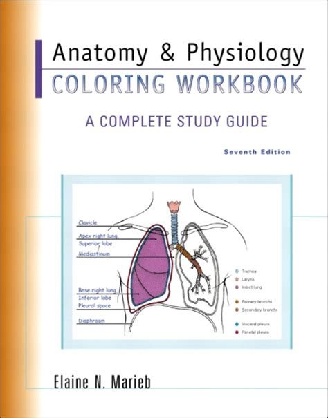anatomy and physiology coloring workbook a complete study guide 12th edition anatomy image organs human anatomy and physiology